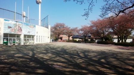 風景15_4_15 葉桜