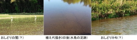 農15_4_30 水鳥たち