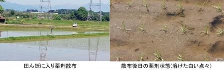 農15_5_9 除草剤の散布