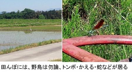 農15_5_11 田や野原の生き物