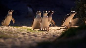 VVLand__9530733_BB00_Penguin_Parade_11_medium_res__Copy.jpg
