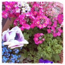 Flowersnow0328.jpg