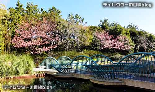 イクスピアリの河津桜が開花 2015年早春の訪れ