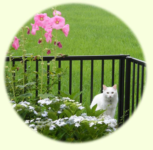 7月の花と猫