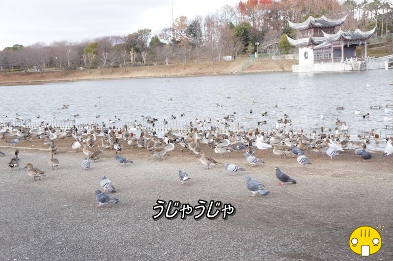 DSC09952_20150113171508f4d.jpg