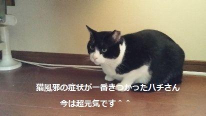 にゅーす3 (1)