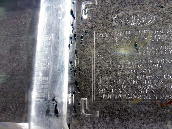150515-1.jpg