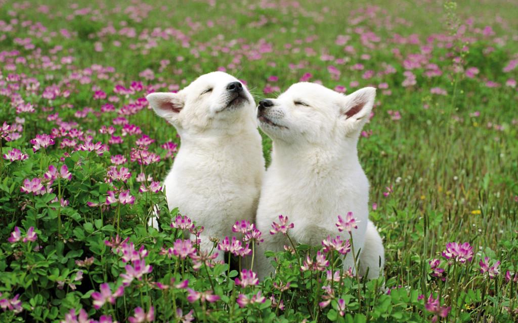feeling_good_pups-1024x640.jpg