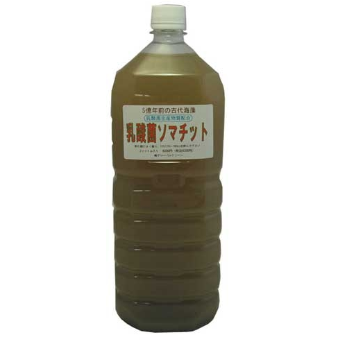 乳酸菌ソマチット(アップ用)