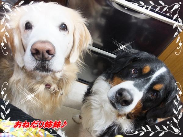 2015-1おねだり姉妹