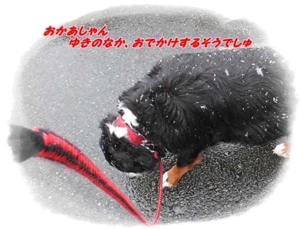 2015-2雪の中おでかけ