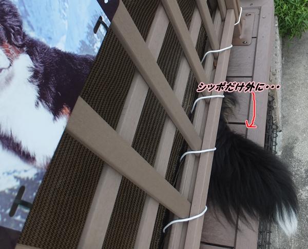 2015-5しっぽだけ