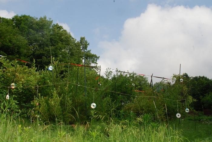 ブルーベリー畑15