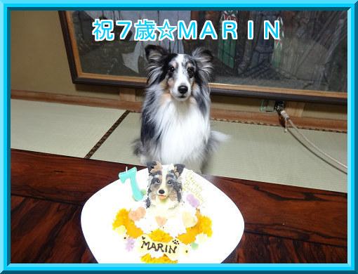 20141226 祝7歳☆MARIN
