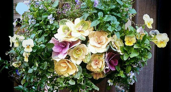 Flower_20150102
