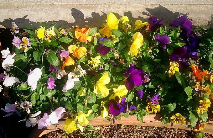 FLOWER_20150202