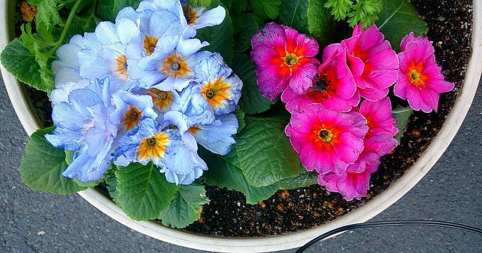 FLOWER_20150206