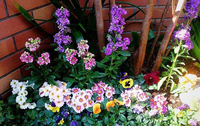 FLOWER_20150219