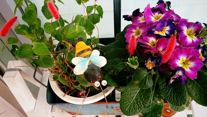 Flower_20150227