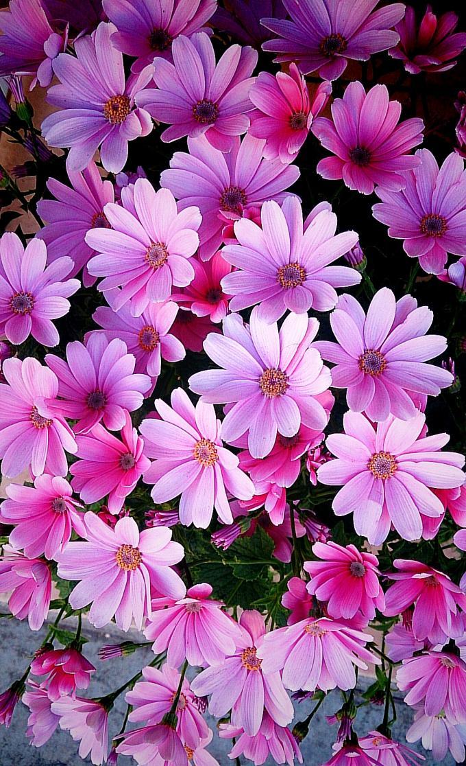 Flower_20150302