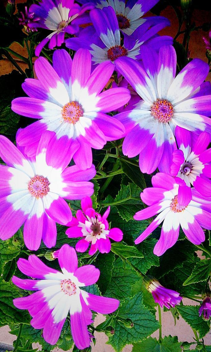 Flower_20150303