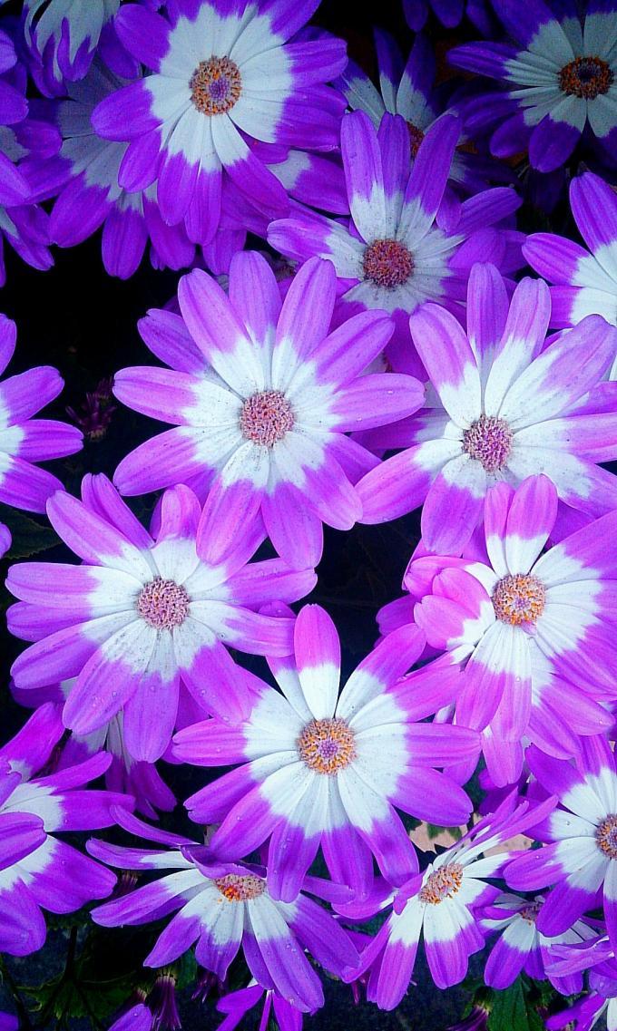 Flower_20150316