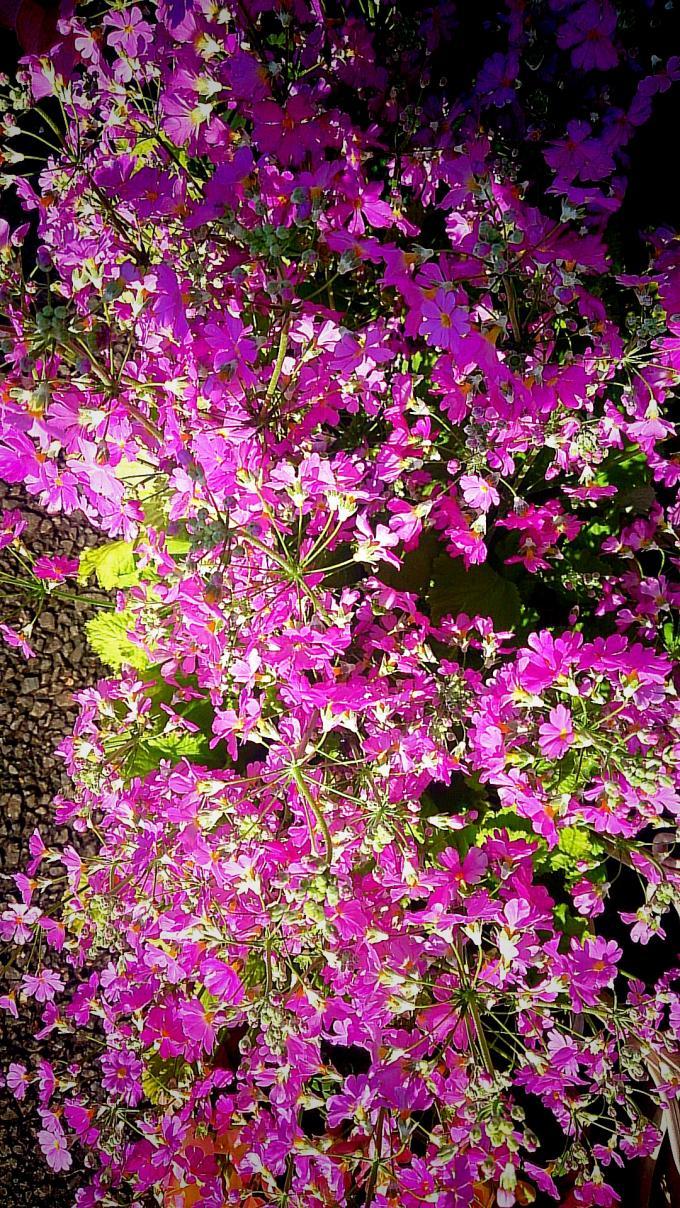 Flower_20150317