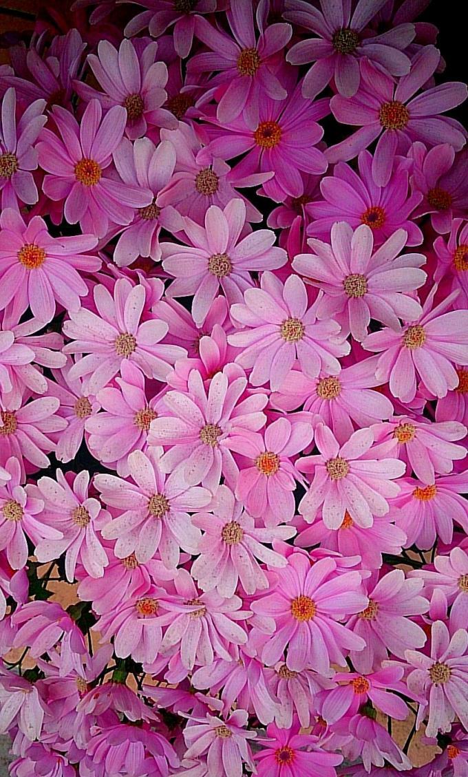 Flower_20150323