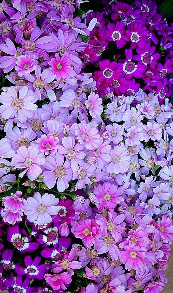 Flower_20150328