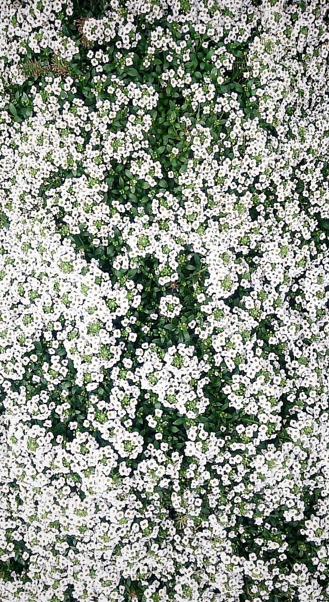 Flower_20150403
