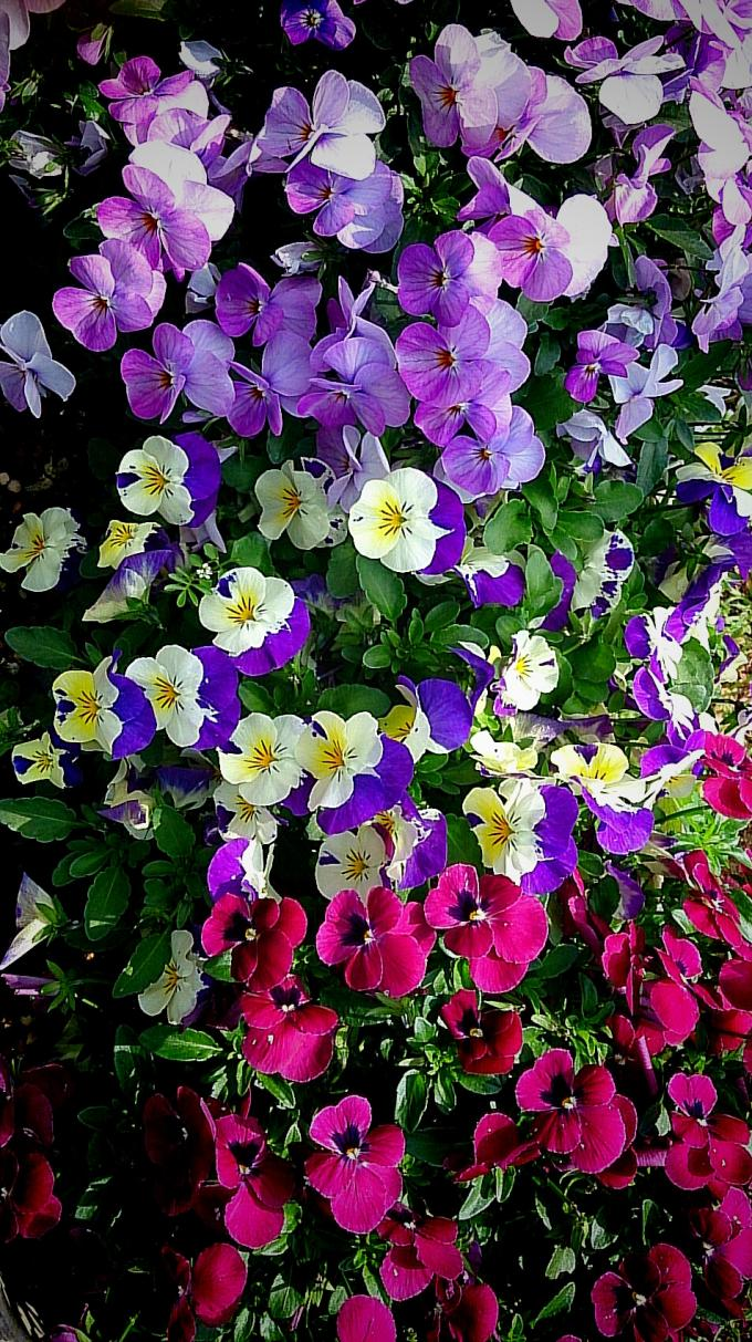 Flower_20150417