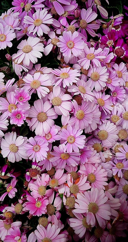Flower_20150413