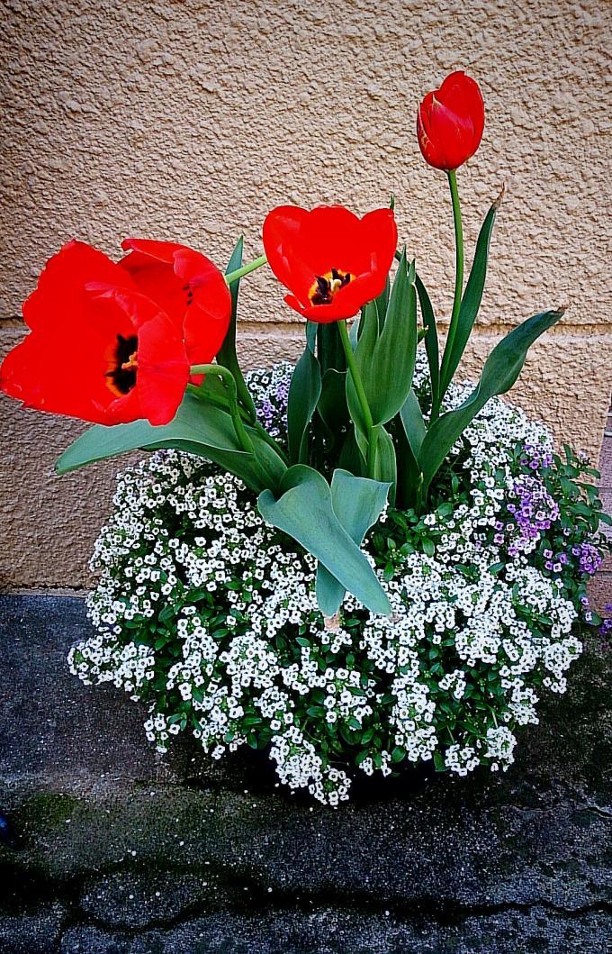 Flower_20150415