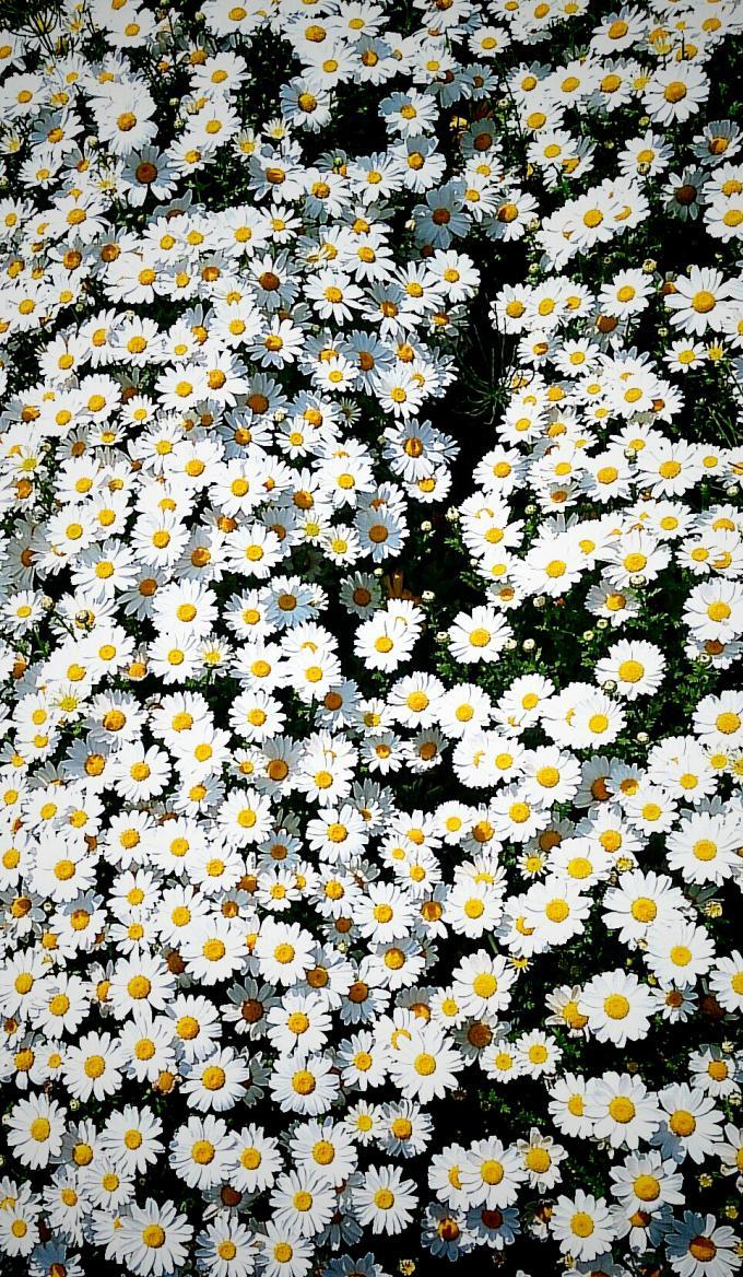 Flower_20150419