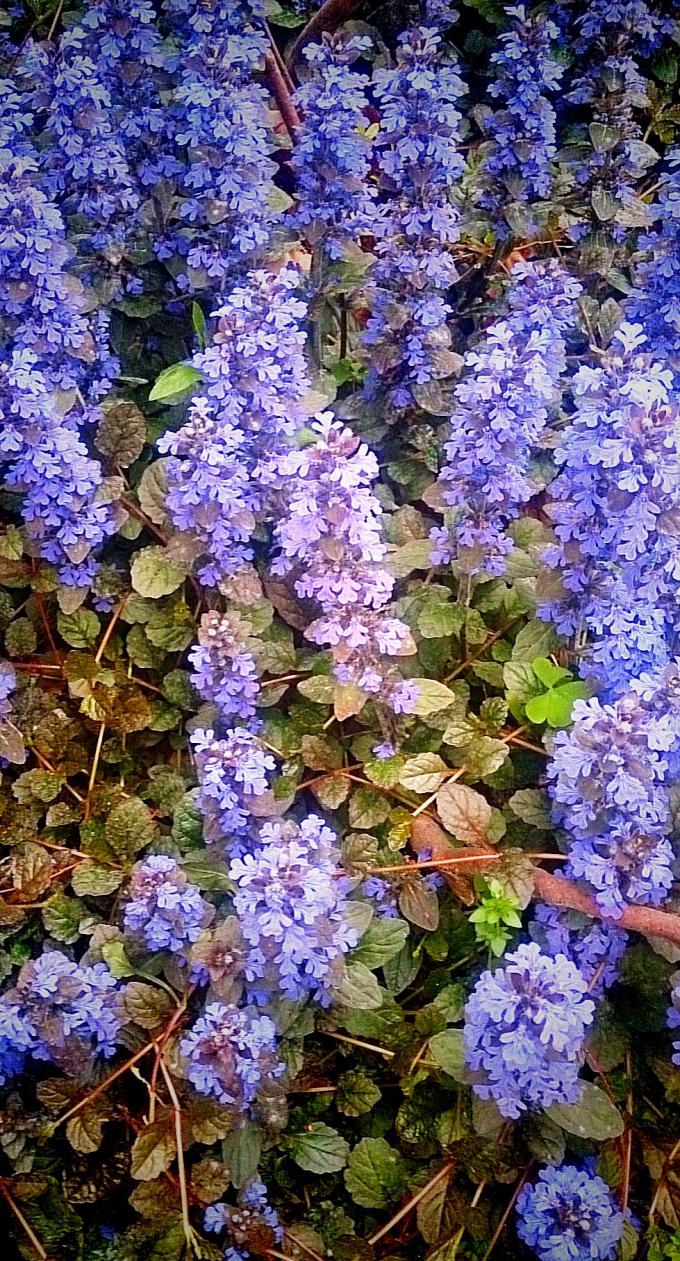 Flower_20150424