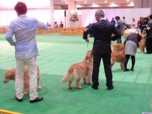 FCIジャパンインターナショナルドックショー2015 :エクステリア横浜(愛犬と過ごすお庭空間のご相談をお受けしています。)
