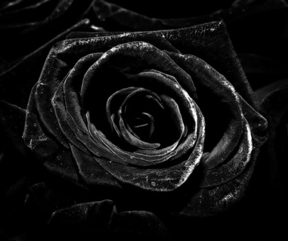 Black-Rose-124.jpg