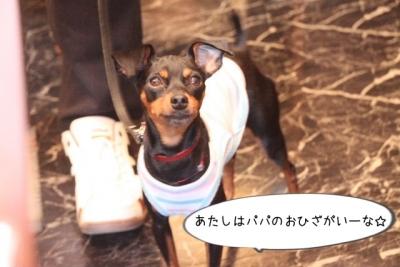2015_05_04_9999_53.jpg