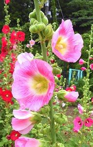 s-ピンクの花