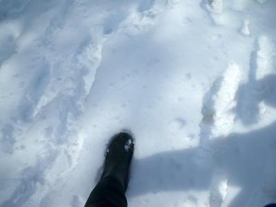 雪冷たいよ