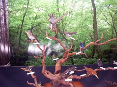 小根山野鳥の森