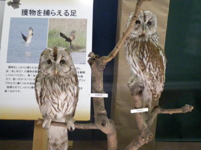 小根山野鳥の森2