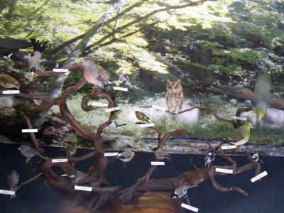 小根山野鳥の森3