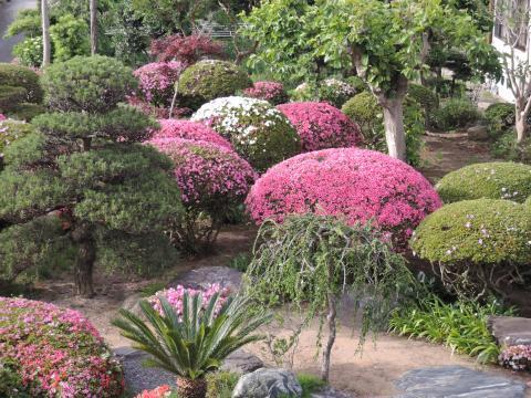 皐月の庭 2