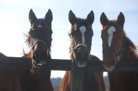 1・牝馬・3頭