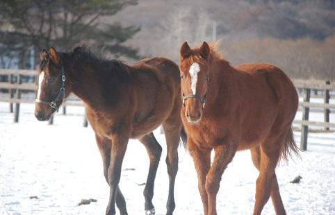 1・牝馬・キング2頭
