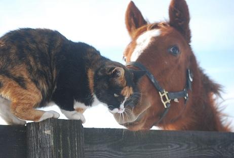 1・牝馬・キングとミケ