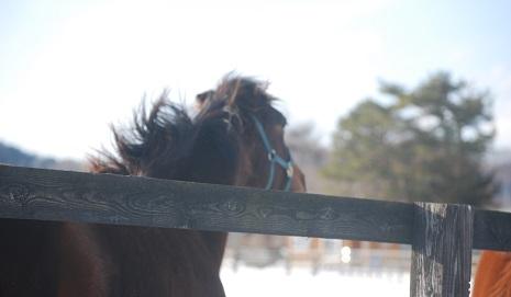 1・牝馬・ディープ蹴散らす