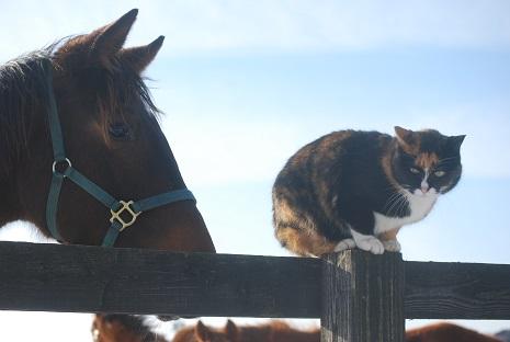 1・牝馬・ディープとミケ