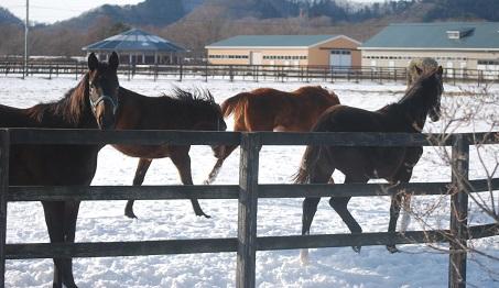 1・牝馬・黒ピサ